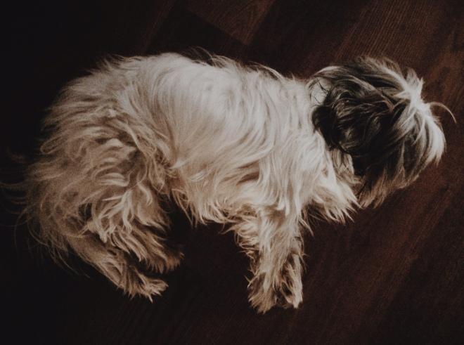 Leo odpoczywa, zdjęcie z listopada
