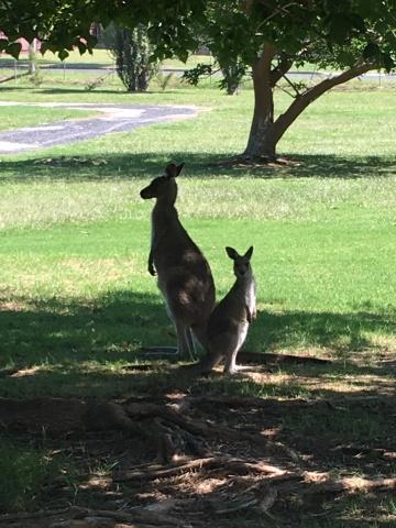 Kangury Eden