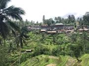 tarasy ryzowe Bali Indonezja