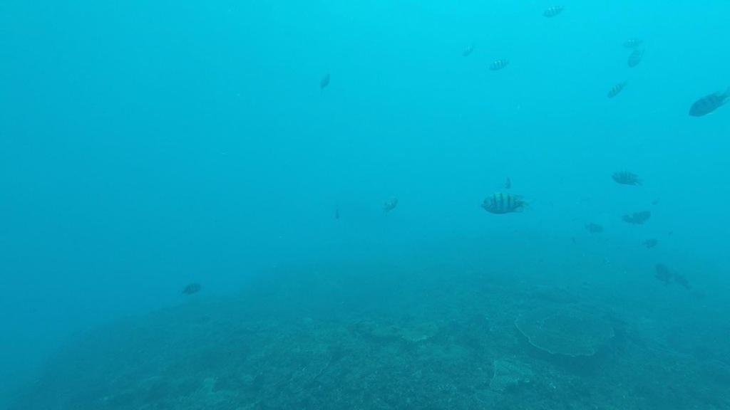 Manta Point Bali Indonezja